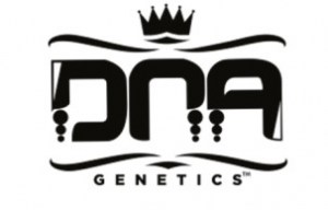 dna-genetics-cannabis-seeds-869437